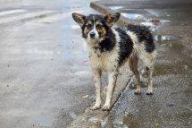 I. Teoderascu_Iasi (dupa ploaie) (7 of 46)